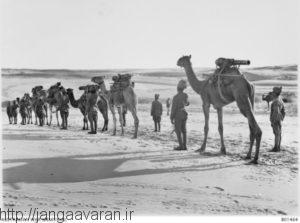 شترنقش بسیارمهمی در نبردهای صحرای سینا ایفا کرد